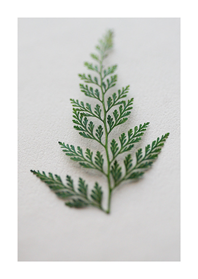 art prints - Fern Gully by Cheer Up Press
