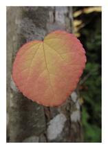Tree Heart by Katsura Creative