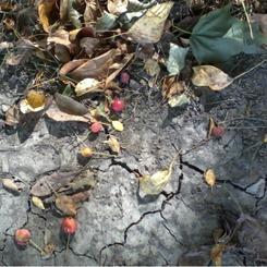 Earthy Seasons