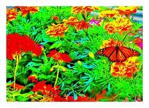 Monarch on Marigold by Richard Fasullo
