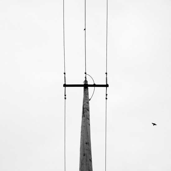 art prints - High Wire by Lauren Ehle