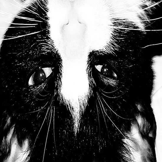 art prints - inquisitive kitty cat by Megan Wenner