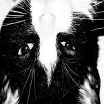 inquisitive kitty cat by Megan Wenner