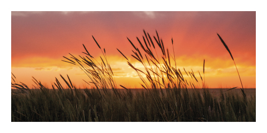art prints - SummerWheat by Bryan Fowler