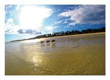 Island Dogs by John Wynn