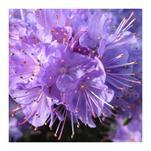 Purple Spring by Katsura Creative