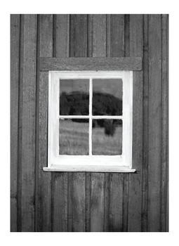 Window reflections