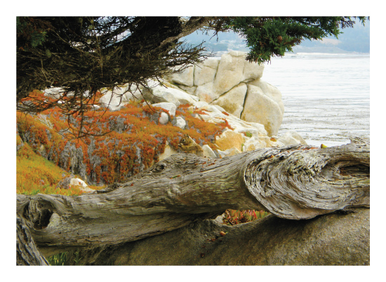 art prints - Down By the Bay by Kristi Anderson