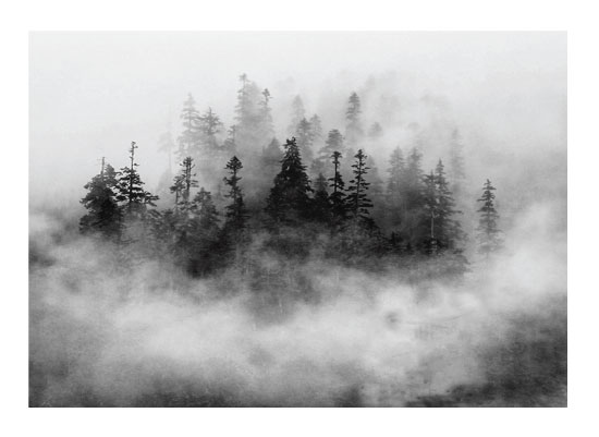 art prints - Lost in the Fog by Mazing Designs
