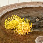 Yellow Flowers by Jenna L. Pasion