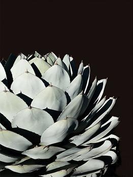 Black Agave