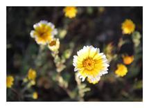 Wild Flower by Pelin Hepcilingirler