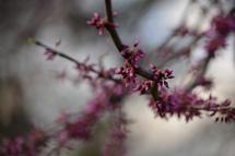 A Redbud by Any Other N... by Katherine Stolarski
