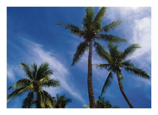 art prints - Happy Three Palm Trees by Marie