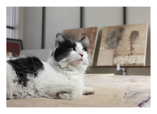 art prints - Cat Art by Rodolfo Kusulas