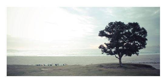 art prints - Tree and Sea by Rodolfo Kusulas