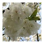 Blossom Beauty by Katsura Creative