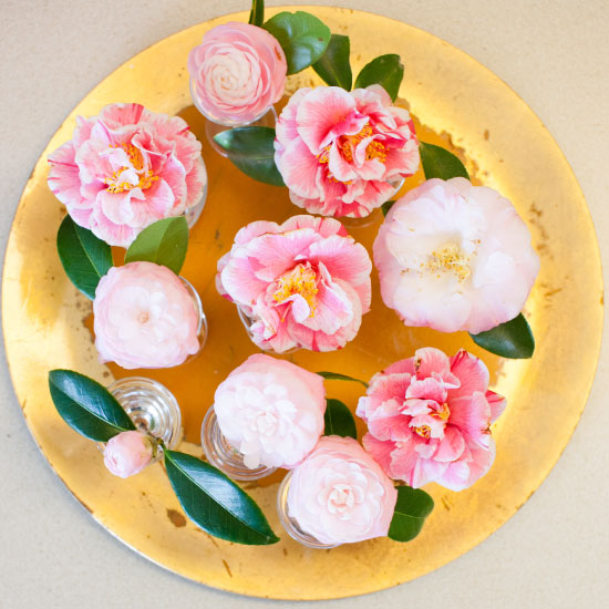 art prints - Camellias in Bloom by Erika Tracy