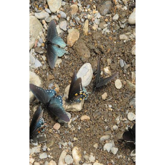 art prints - Pristine butterflies by Kori Woodring