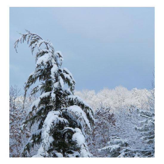 art prints - Snow Delight by Kori Woodring