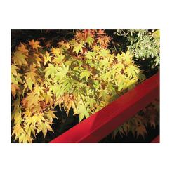 Red Fence Fall Golden Leaves