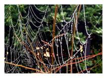 Wonderweb by Erynn Mozier