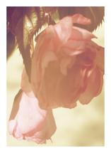 Vintage Blossom by Alayne Richardson