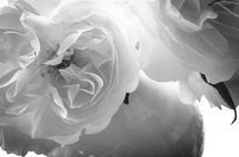 Vintage Roses by Tanya Joiner Slate