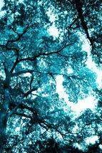 Canopy In Blue by Tanya Joiner Slate