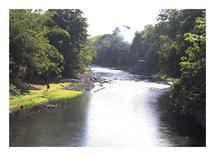 Sunny Calm River by John Wynn