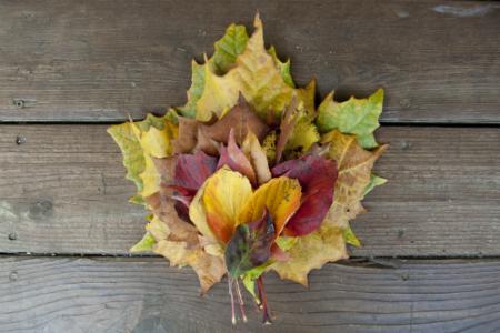 art prints - Handful of Fall by Katherine Stolarski