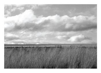 Windswept Fields