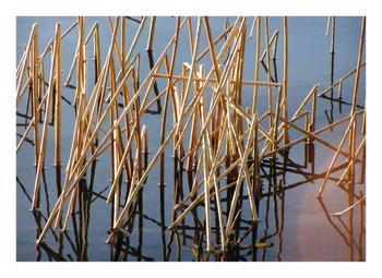 Bruised-Reeds