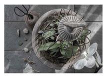 Succulent Still Life by Nancy Jeanne Morlino