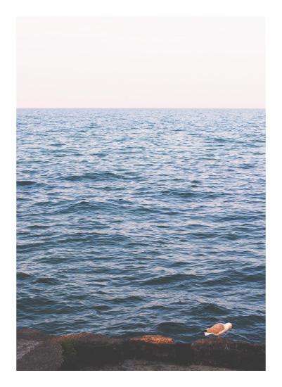 art prints - Lake View. by Pamela Steiner
