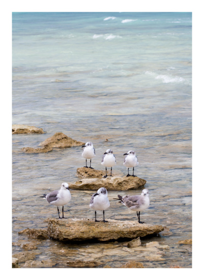 art prints - Sea Guards by Isabel Knez