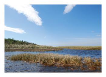 Wetland Everglades