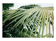 Tropical Vibes by Megan Tsang