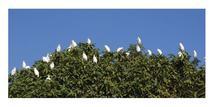 Migratory Birds by anupaul