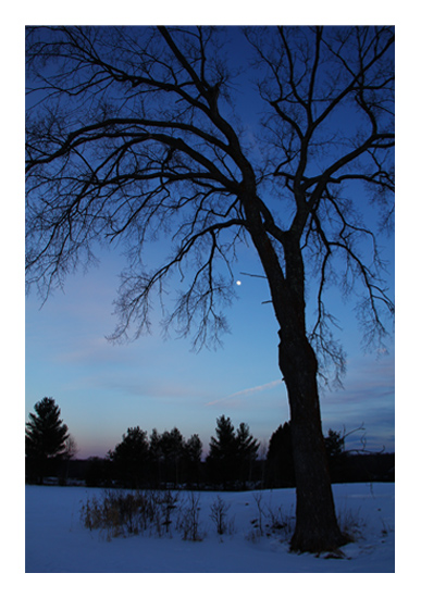 art prints - Twilight Tree by Images of Light