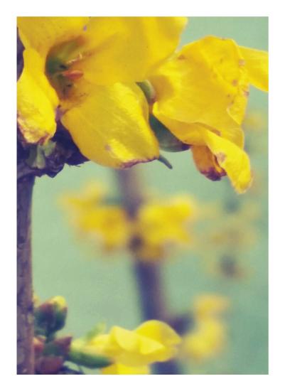 art prints - Golden Spring by Alayne Richardson