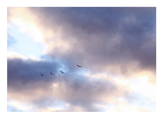 art prints - In The Clouds by Images of Light