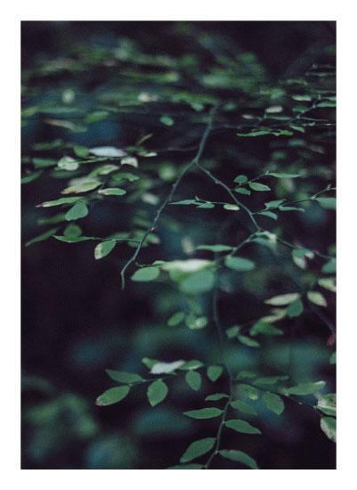 art prints - Forest Focus by Satpreet K
