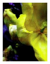 Florilege II by LeeAnne Mallonee