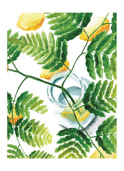 art prints - ferns on lemons by pottsdesign