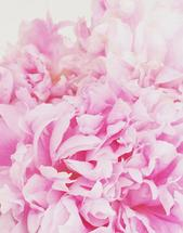 Pretty In Peony by Margaret McCarthy