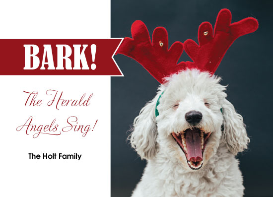 holiday photo cards - Bark! by Kristin Modjeska-Holt