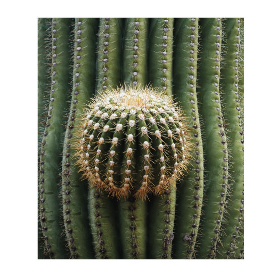 art prints - Cactus Pattern by Creative Imagery