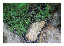 Raindrops keep falling... by Imelda Sherlock