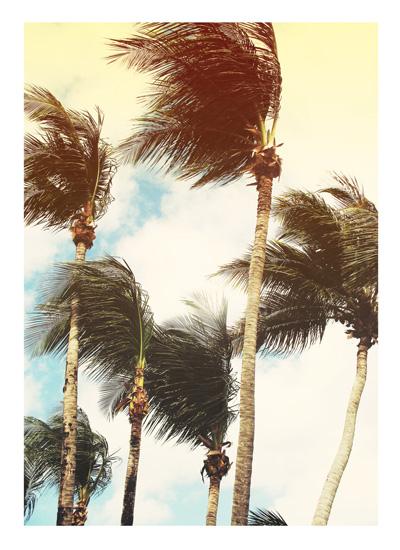 art prints - Dancing Palms by Gray Star Design
